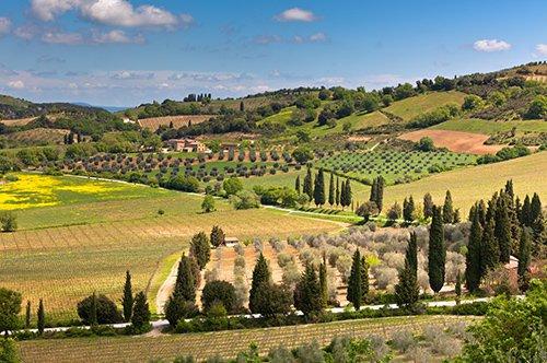托斯卡纳乡村基安蒂区葡萄酒主题之旅