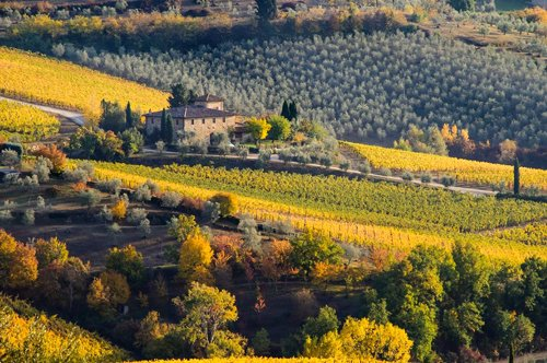 Private Tour Chianti in One Day